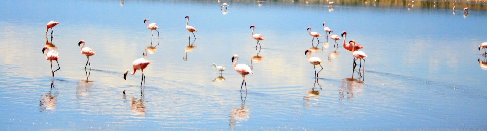 Flamingos Flight